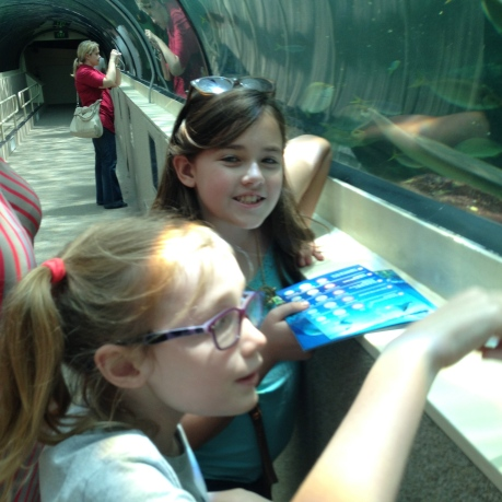 The girls enjoying the life aquatic at the Sydney Aquarium